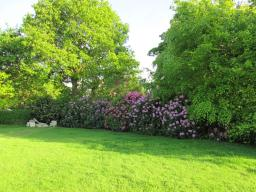 Image Un côté du jardin